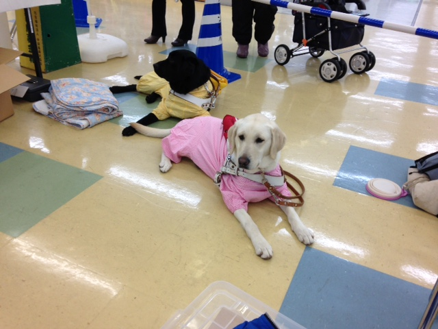グリーンモール山室で盲導犬ふれあいイベントを開催いたしましたの画像